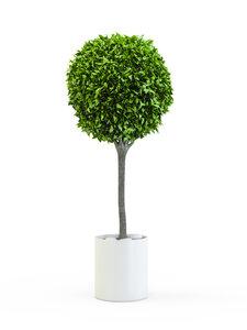 Trees rental Houston, TX