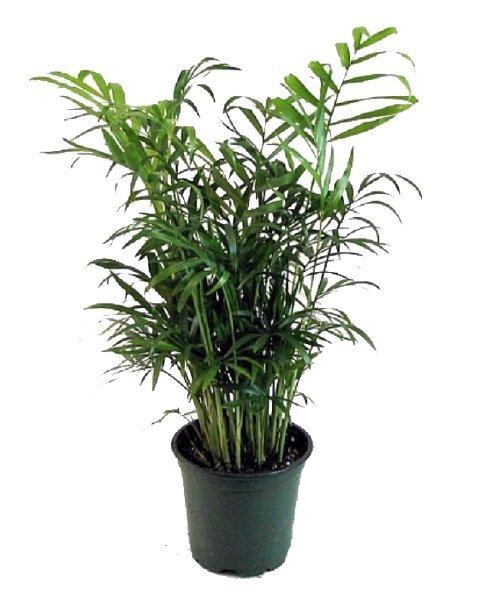 3-5 Ft. Plant rental New Orleans, LA